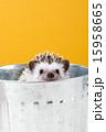 Pet_143 15958665