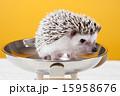 Pet_104 15958676