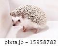 Pet_133 15958782
