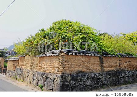 萩の街並み 武家屋敷の土壁と夏みかん 15969088