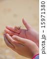 生物 ヤドカリ 手のひらの写真 15971380