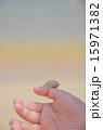 生物 ヤドカリ 手のひらの写真 15971382