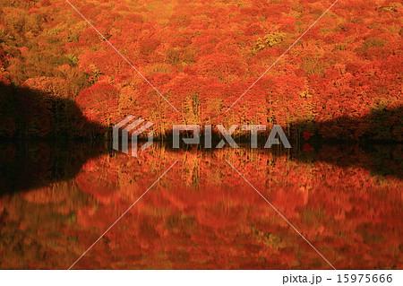 八甲田 蔦沼の紅葉 15975666
