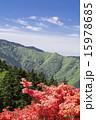葛城山 ツツジ 15978685