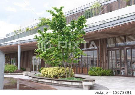 ヤマボウシの木 15978891