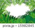 熱帯雨林 15982845
