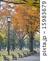 皇居前広場 秋 ベンチの写真 15983679