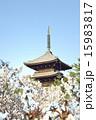 仁和寺 御室桜 五重塔の写真 15983817