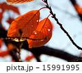 虫食いの葉 15991995