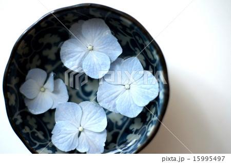 紫陽花 15995497