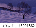 3本の木 15996382