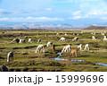 ペルー あるぱか アルパカの写真 15999696
