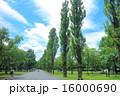 ポプラ ポプラ並木 水元公園の写真 16000690