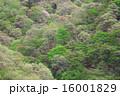 新緑 16001829