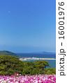 能古島のコスモス 16001976