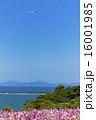 能古島のコスモス 16001985