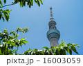 東京スカイツリー 16003059