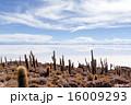 塩湖 ウユニ塩湖 ウユニの写真 16009293