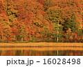 大沼 自然 秋の写真 16028498