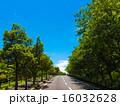並木 車道 新緑の写真 16032628