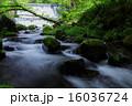 沢 清流 自然の写真 16036724