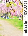 八重桜 お花見 花の写真 16038891