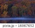 大沼 自然 秋の写真 16067652