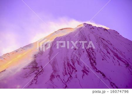 紫富士 16074796