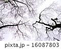 樹木 植物 花の写真 16087803