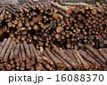 生木 木材 丸太の写真 16088370
