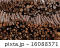 生木 木材 丸太の写真 16088371