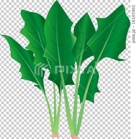 蔬菜 青菜 冬季蔬菜 16105902