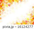 もみじ 16124277