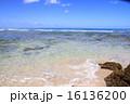 ハワイの海 16136200