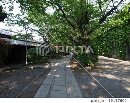 素朴な石畳の小道 16137602
