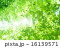 新緑・エコイメージ 16139571
