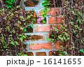 育つ かべ 壁の写真 16141655