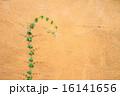 育つ かべ 壁の写真 16141656