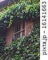 育つ 窓 緑の写真 16141663