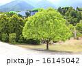 養老公園 16145042