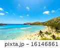 ハワイ 16146861
