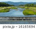 賀茂川 河川 川の写真 16165694