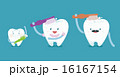 Family teeth are brushing 16167154