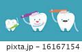 歯 ブラッシング ファミリーのイラスト 16167154