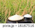 新米 白米 生米の写真 16167516