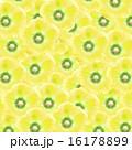 花 タチアオイ 立葵の写真 16178899