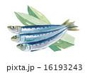 鰯 青魚 魚のイラスト 16193243