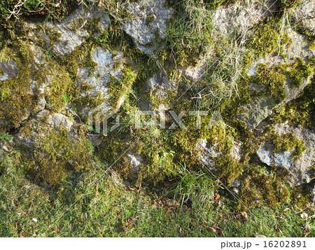 御在所岳 苔むした石垣 / Mt.Gozaisho Mossy Stone Wall 16202891