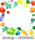 野菜フレーム 正方形 16204442