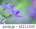 開花 花 花びらの写真 16211345